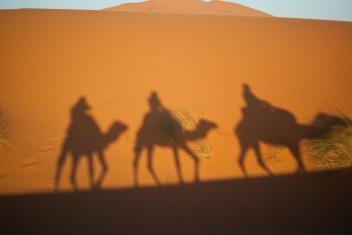 camels-897658_1920